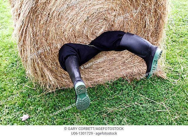 A man rolled up in a hay bale with his legs hanging out