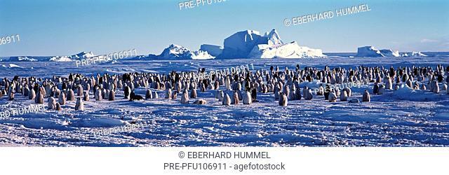 Emperor penguin colony in Antarctica landscape