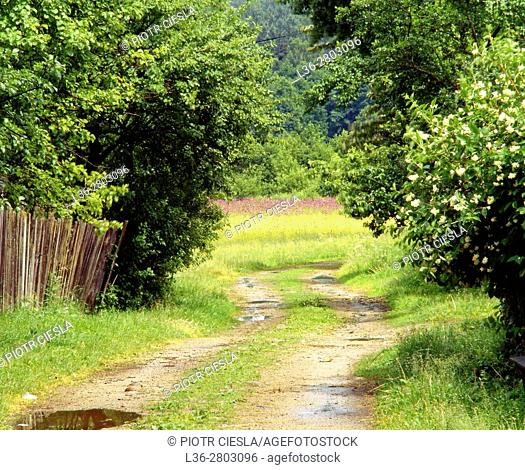 Poland. Podlasie region. Country road in a villiage