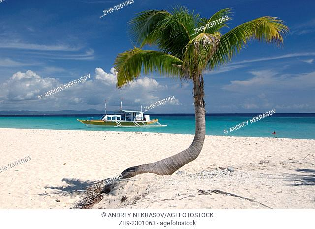 Palm tree on the shore of the island Malapaskua, Bohol Sea, Philippines, Southeast Asia,