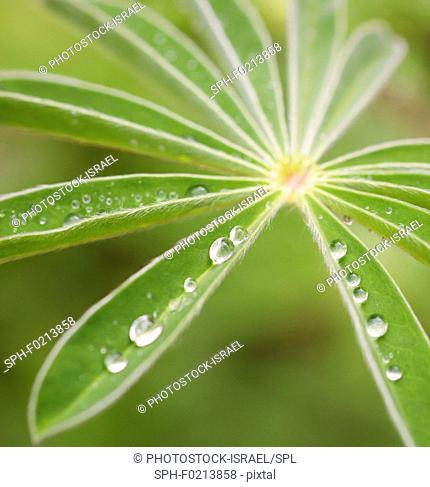 Rain drops on a green leaf