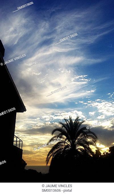 Palm tree. Caldes d'Estrac, Barcelona Province, Spain