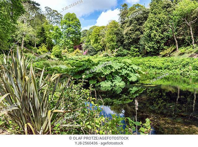 Mallard Pool at the center of Trebah Garden, Cornwall, England, UK