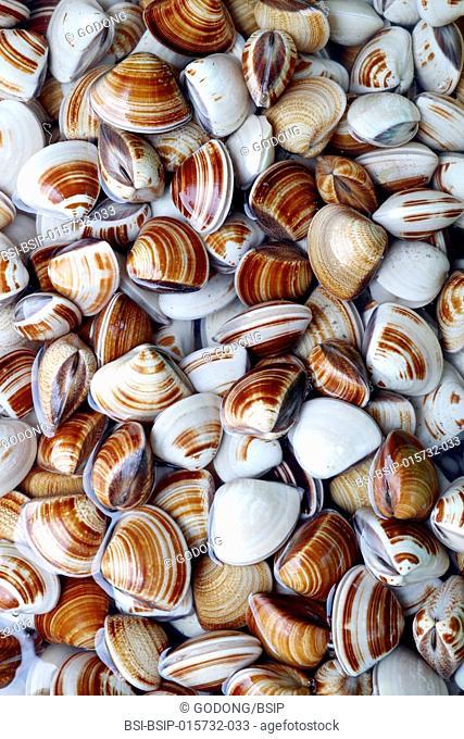 Fish market. Fresh shells. Vung Tau. Vietnam