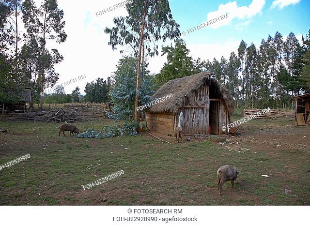 chile mapuche temuco america south latin dearth