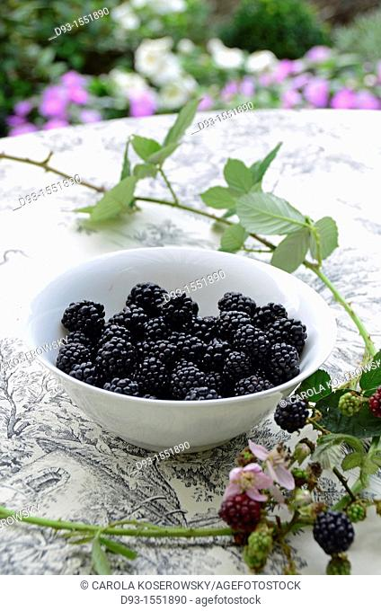 blackberries in a white bowl with tendril