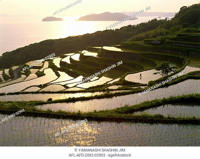Nagasaki japan food Stock Photos and Images | age fotostock