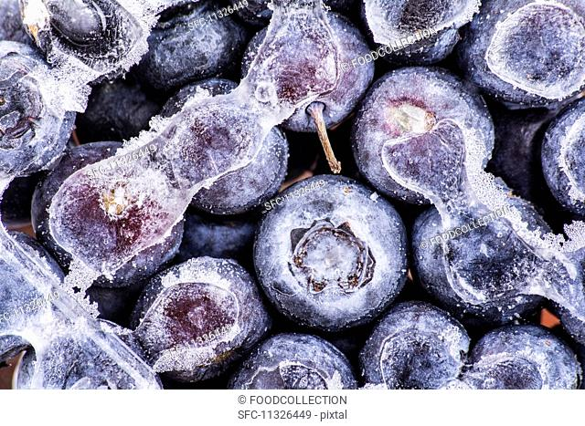 Frozen blueberries (seen from above)
