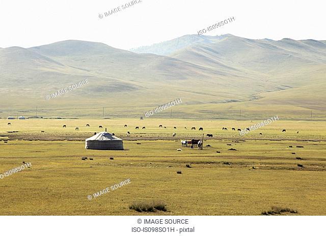 Mongolian steppes landscape
