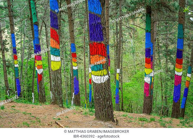 Painted tree trunks, painted wood, El Bosque animado de Oma, artist Agustín Ibarrola, Oma forest, Basque Country, Spain