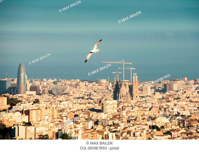 Cityscape view with flying gull and Sagrada Familia, Barcelona, Spain