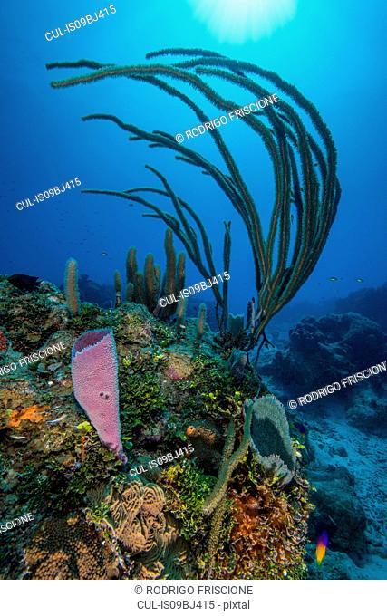 Reef landscape, Chinchorro Banks, Xcalak, Quintana Roo, Mexico