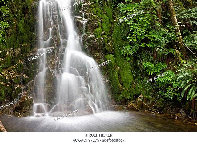 Waterfall in the rainforest near Port Alice, Northern Vancouver Island, Vancouver Island, British Columbia, Canada