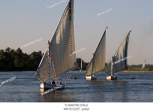 Traditional felucca sailing boats on the River Nile near Luxor, Egypt, North Africa, Africa