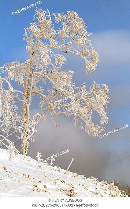 Landscape in winter, Hokkaido, Japan