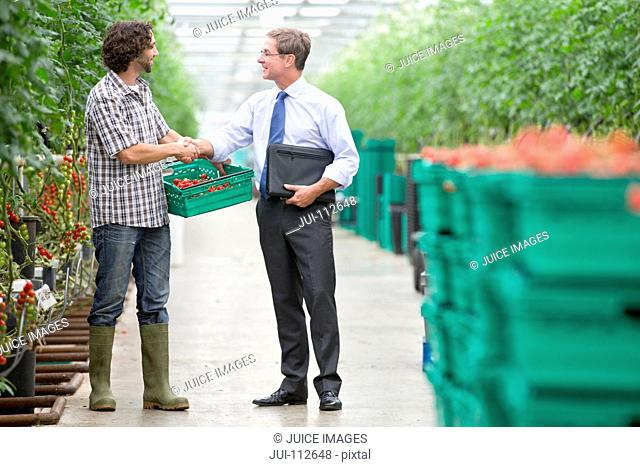 Businessman and grower with crate of tomatoes handshaking in greenhouse