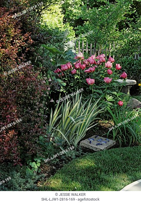 Gardens: A secluded area in garden, large group of pink peonies in bloom, a partially hidden concrete bench, a square slab of rock with fake blue fish on it