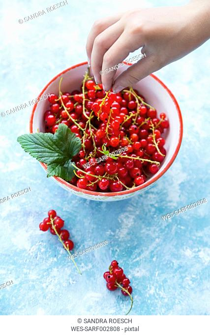 Hand of girl taking red currants