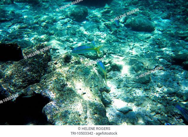 Coral Gardens Tobago Dead Coral