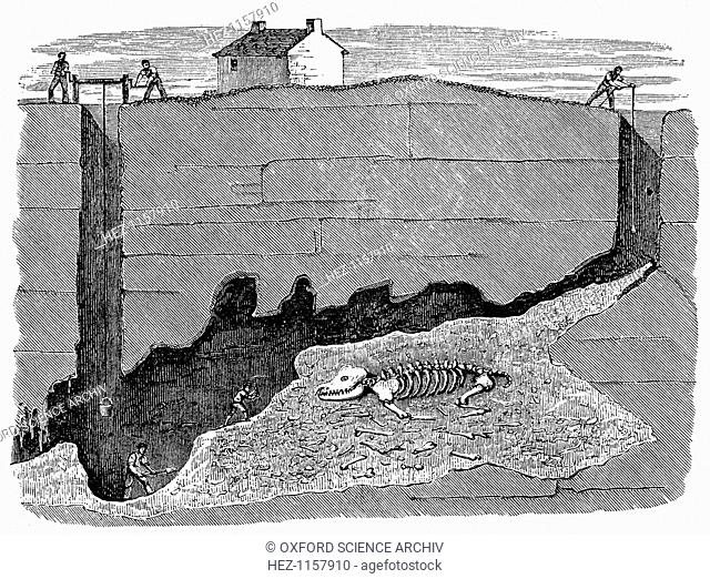 Dream Lead Mine, near Wirksworth, Derbyshire, 1881. Sectional view showing the workings and the position in which a skeleton of a rhinoceros was discovered