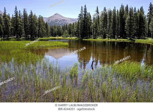 Small lake at the Tioga Road, near Tuolumne Meadows, Yosemite National Park, California, USA