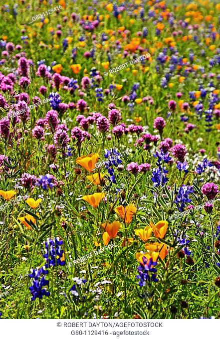 Nature's bouquet of wildflowers