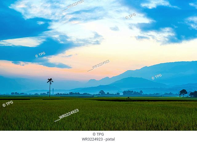 Taiwan;Taitung County;Chishang Township;East Rift Valley;Rice;Rice Field;Bolang Avenue;Jinchengwu Road