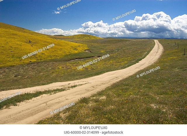 DIRT ROAD through wildflower bloom of GOLDFIELDS Lasthenia californica near the CALIFORNIA POPPY RESERVE - ANTELOPE VALLEY, CALIFORNIA