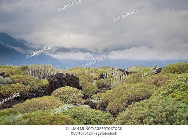 Flora and landscape of the Canary Islands. Special Nature Reserve Güímar badlands. Tenerife. Spain
