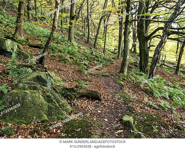 Footpath through Autumn Trees in Middle Dean Woods near Pecket Well Hebden Bridge West Yorkshire England