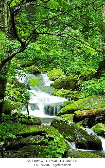 Stream, Spring Landscape, Newfound Gap Rd, Great Smoky Mountains National Park, Tennessee, USA