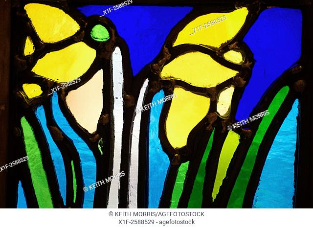 Detail of two daffodils , the national emblem of weales, in a stained glass window at the National Library of Wales, Aberystwyth UK