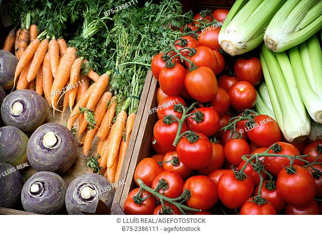 Organic vegetables. Carrots, cellery, tomatoes and sweet