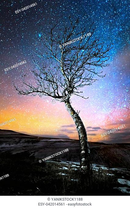 Winter night landscape lonely tree standing in a mountain lowland against the backdrop of the northern milky way and orange city lights on the horizon