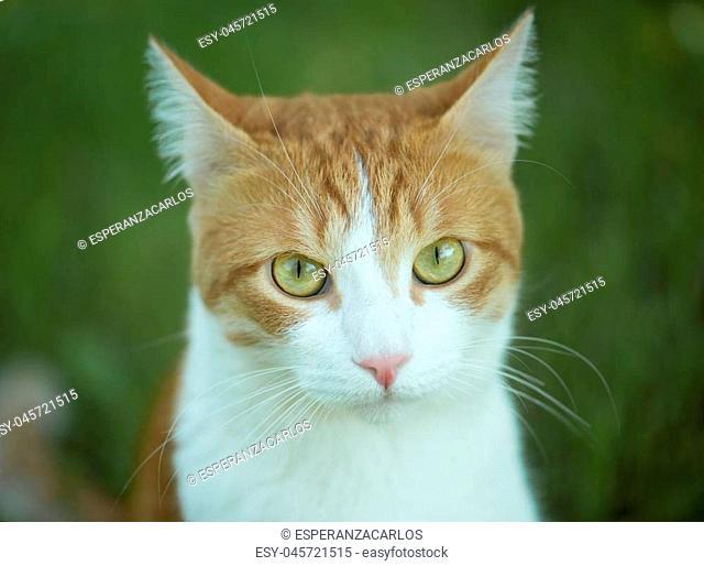 Cute cat with big green eyes closeup