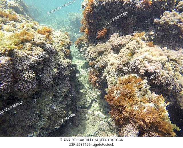 Underwater image Las Rotas nature reserve Denia Alicante Spain