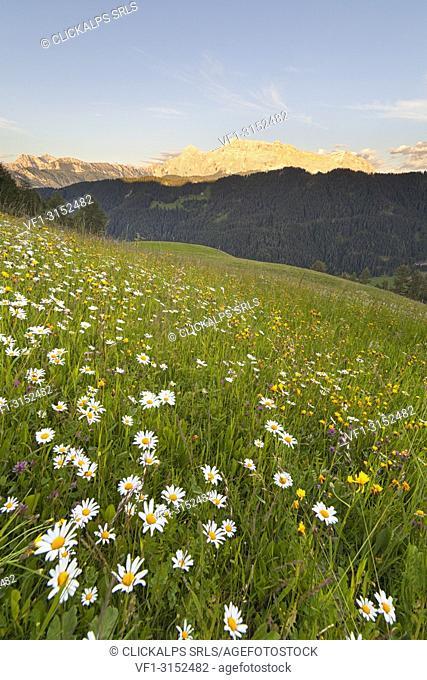 Longiarù, San Martino in Badia, Badia Valley, Dolomites, Bolzano province, South Tyrol, Italy. Meadows of Longiarù woth Sasso della Croce in the background