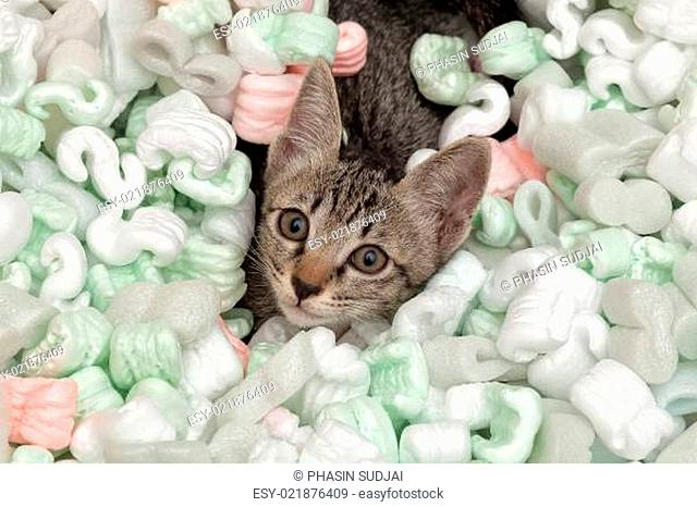 Curious cat in packing peanuts