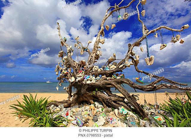Mexico, Quintana Roo, Cozumel Island. MAriage tree
