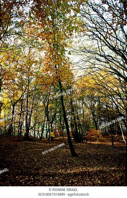 Autumn yellows and yellow jumper Hampstead Heath, London, UK
