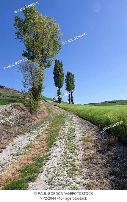 Verdant farmland near the village of Olmos de Peñafiel - Valladolid Province, Castile and León, Spain