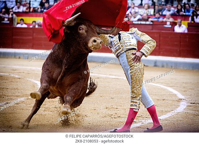 Jaen, SPAIN - 17 october 2008: Spanish bullfighter bullfighting giving a spectacular chest pass with the crutch in the Bullring of Jaen or called Coso of...