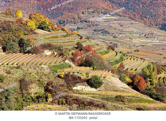 Cultivated landscape with vineyards in autumn, Woesendorf, Wachau valley, Waldviertel region, Lower Austria, Austria, Europe