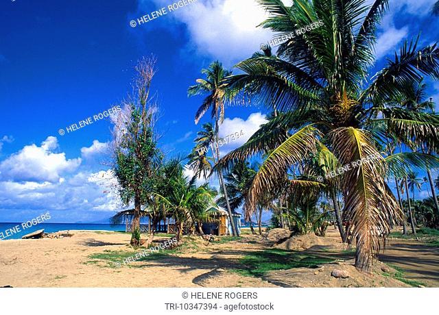 Nevis Pinney's Beach Palm Trees