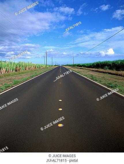 View of a road cutting through a sugar cane plantation, Kauai, Hawaii, USA