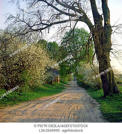 Country road. Podlasie region. Poland