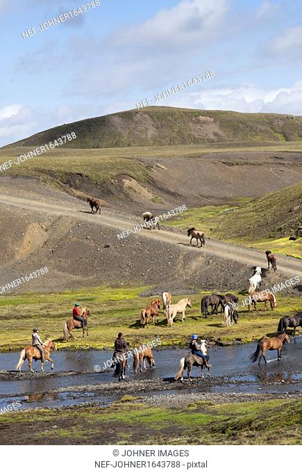 Women riding Icelandic horses crossing river