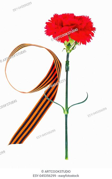 Red carnation with St. George's ribbon is the symbol of Victory Day. Studio Photo