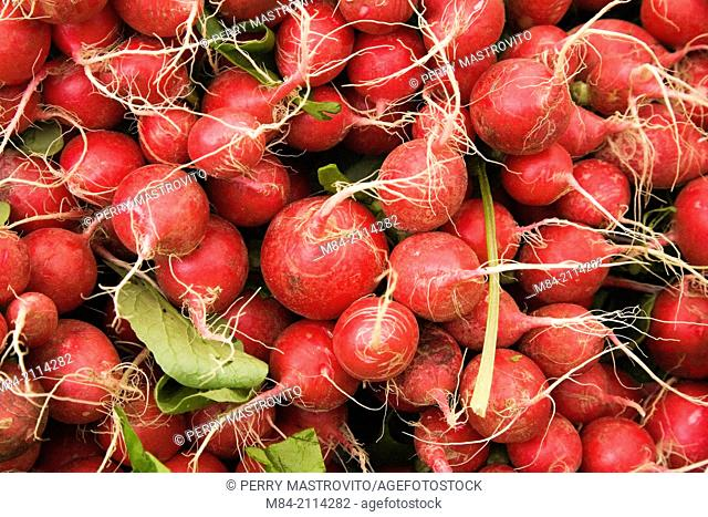 Close-up of freshly picked red radishes (Raphanus sativus) on display at an outdoor market, Byward Market, Ottawa, Ontario, Canada
