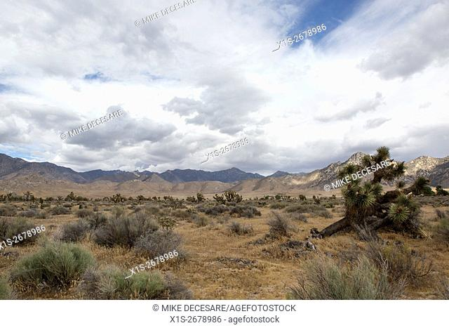 Storm clouds begin to form over a desert landscape in Joshua Tree National Park